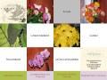 Aubépine - Création florale